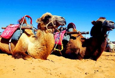端午走进沙漠伊甸园沙坡头 水稍子 西部影城 玩转沙漠 (3日行程)