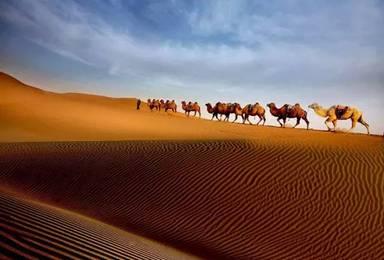 金秋盛典 额济纳胡杨林+腾格里沙漠深度探索之旅 银川起止(6日行程)