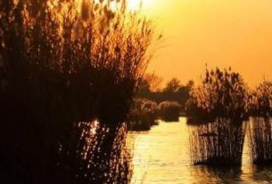 5A沙湖 西部影视城 5A沙坡头 西夏王陵双飞品质游 赠送一晚厦门住宿(6日行程)