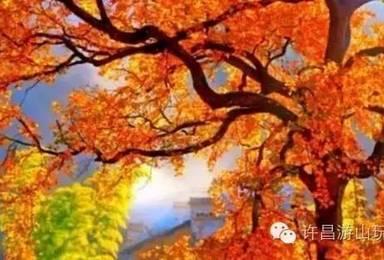国庆节假期 金秋十月 相约额济纳 邂逅胡杨林 摄影之旅(8日行程)