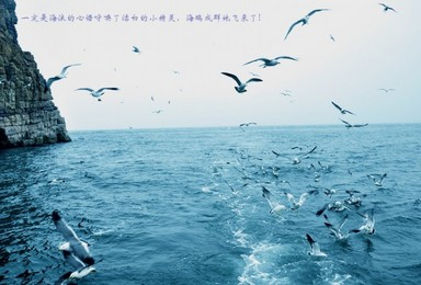 神奇海岛游长岛蓬莱万鸟岛候叽岛庙岛海豹苑拍片吃海鲜(4日行程)