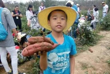 亲子农耕体验 挖红薯 摘水果 做花馍(1日行程)