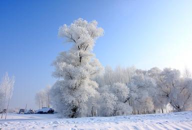 相约冰城哈尔滨 中国雪谷穿越 梦里雪乡 长白山 雾凇岛(7日行程)