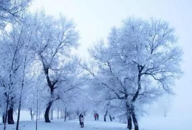 冰雪童话世界 雾淞岛 雪乡 雪谷 哈尔滨(4日行程)