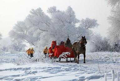 雾凇岛 感受雪乡的冬日童话 雾凇岛 黑龙江雪乡 雪谷(3日行程)