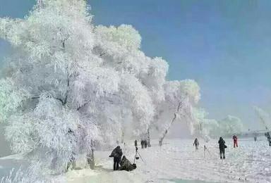 冰雪哈尔滨 雪乡雪谷 长白山 雾凇岛出行计划(7日行程)