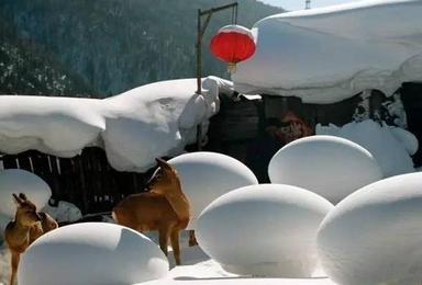 冬季线路 东北 穿越雪乡 长白山 赏雾凇 泡温泉(7日行程)