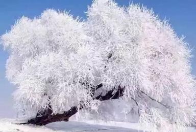 激情闯关东 长春 雪谷 雪乡 长白山 滑雪 吉林雾凇岛 哈尔滨 温暖东北行(7日行程)