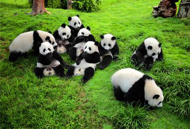 中国最有趣工作 熊猫观察员之旅 四川保护大熊猫基地爱心体验(5日行程)