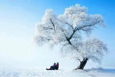 原野户外12月15-18日 雾凇岛 雪乡雪谷 哈尔滨冰雪大世界 中央大街索菲亚大教堂(3日行程)