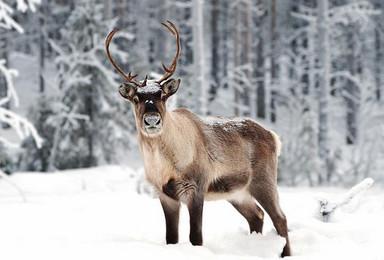 这个冬天的圣诞节 你想火爆在朋友圈内 还是想冻僵在朋友圈外(3日行程)