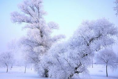 雾凇岛 感受雪乡的冬日童话 赏雾凇(1日行程)