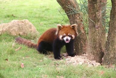 泉州新开海丝野生动物世界(1日行程)