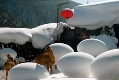 东北 穿越雪乡 长白山 赏雾凇 泡温泉(7日行程)