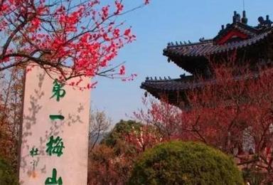 南京赏梅花 总统府 明孝陵 中山陵 夫子庙逛庙会(2日行程)