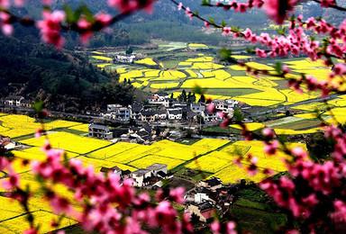 春天里 走进中国最美乡村婺源 观无边花海(2日行程)