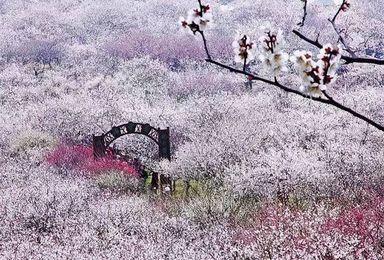 徒步穿越太湖三尖 探寻梦中的香雪海(1日行程)