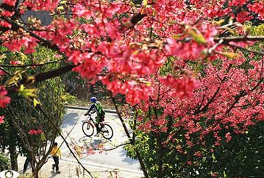郴州观赏樱花园 汝城泡温泉 登万时山草原(3日行程)