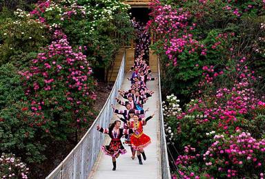 贵州花事 黔西百里杜鹃黄果树瀑布(5日行程)