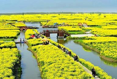 千岛菜花 水上森林 扬州瘦西湖(3日行程)