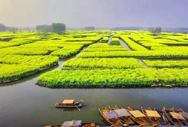 周末扬州 兴化水上油菜花 瘦西湖 李中水上森林(2日行程)