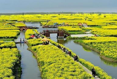 乌镇 西塘 扬州瘦西湖 垛田千岛油菜花(4日行程)