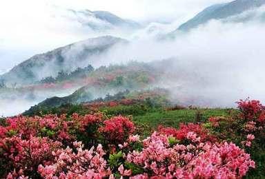 杜鹃花海 童话世界稻城亚丁 圣城拉萨 穿越川藏线318(10日行程)