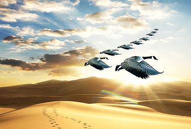 腾格里沙漠千人徒步挑战赛(2日行程)
