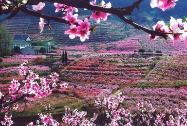 一起去十里桃花源赏花吧 上海出发 当日往返(1日行程)