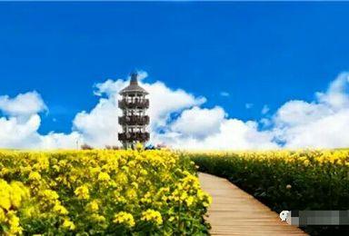 清明假期水上千岛油菜花 李中水上森林 烟花三月下扬州(3日行程)