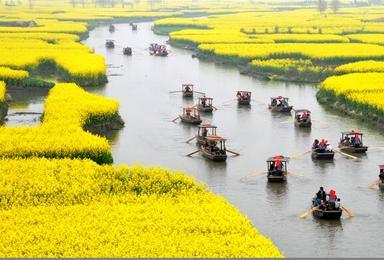 四月 兴化油菜花 李中水上森林 扬州瘦西湖 何园(3日行程)