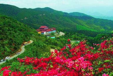 相约灵山福地 永州阳明山 天下第一杜鹃红 浪漫花期如约而至(3日行程)