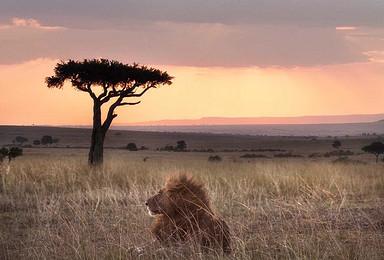 肯尼亚野性的呼唤 原始 自然 神秘 狂野(8日行程)