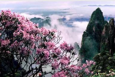 如梦如幻 湖南郴州莽山观云赏花之行(2日行程)