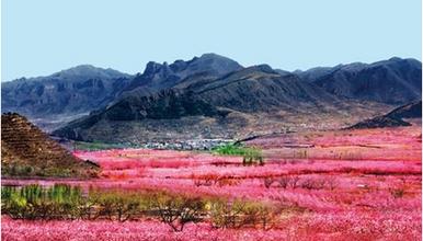 平谷桃花节 赏花 观景 行摄 徒步22万亩桃花花海中 老象峰(1日行程)