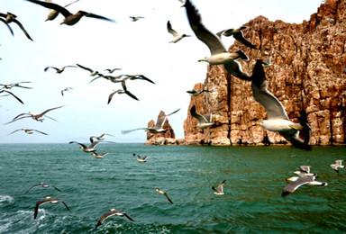大巴蓬莱阁 长岛 庙岛 万鸟岛 月亮湾 海岛浪漫之旅(4日行程)