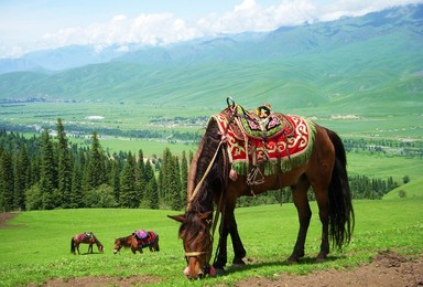 新疆环线 喀纳斯 伊犁 吐鲁番 禾木大 那拉提深度纯玩(14日行程)