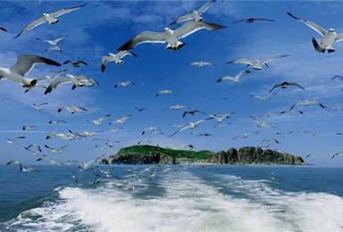 浓情端午海岛之旅 海驴岛 海鸥王国 赏成山头最美日出日落(3日行程)