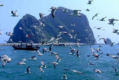 神奇海岛游长岛万鸟岛蓬莱吃海鲜长岛拍片吃海鲜快乐游(4日行程)