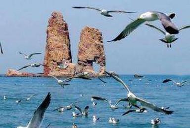 端午 拼团 出游 蓬莱长岛 撒欢品海鲜大餐(4日行程)
