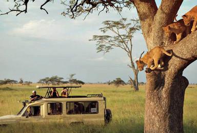 万物之灵 肯尼亚 坦桑尼亚越野观兽游猎之旅 全国联运(14日行程)