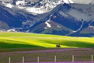 新疆 走进天山深处秘境 聆听草原开花的声音(8日行程)