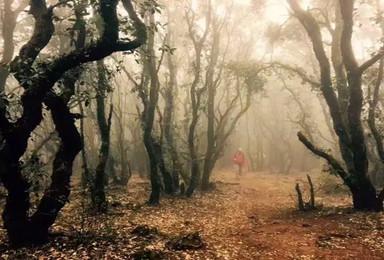 7月8日 本周六 昆明十峰之石林老圭山一日攀登 捡菌子去(1日行程)