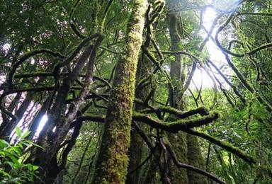 哀牢山秘境 一条 奇幻森林 般仙境的探险线路(6日行程)