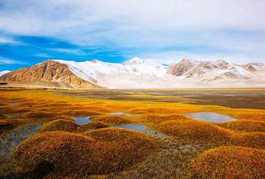 大美新疆之五彩滩 白沙湖 白哈巴 喀纳斯 禾木 魔鬼城(8日行程)