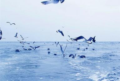 国庆 神奇海岛游 长岛 蓬莱 万鸟岛 候叽岛 庙岛 海豹苑(4日行程)