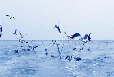 暑假 神奇海岛游 长岛 蓬莱 万鸟岛 候叽岛 庙岛 海豹苑(3日行程)