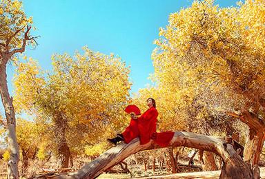 额济纳金秋 摄影 仙米彩林 额济纳胡杨林 张掖 金塔 嘉峪关(7日行程)