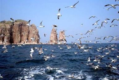 最神奇的海岛 长岛 万鸟齐飞(3日行程)