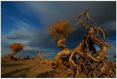 嘉峪关 额济纳胡杨林 巴丹吉林沙漠 沙湖 西部影城 沙坡头(6日行程)